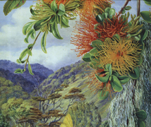 """Chilean flora trough the eyes of Marianne North"""